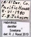 Habrolinus dentifer