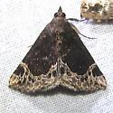 moth 4074-2 - Hypena abalienalis
