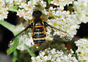 Orange County Bee Fly Archives #290 - Villa