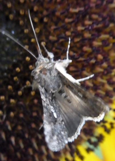 Gray and White Moth During Day