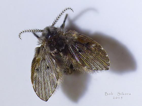 Tiny moth ?
