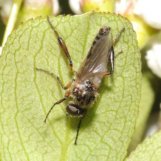 Love Bug - Bibio - male