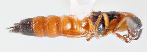 Mojave-15 - Neobisnius