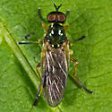 Greenish Fly - Beris fuscipes