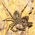 Spider with Slowpoke prey