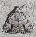 moth - Catocala micronympha