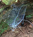 Luminescent Blue strange Web