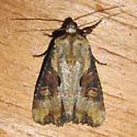 moth - Lateroligia ophiogramma