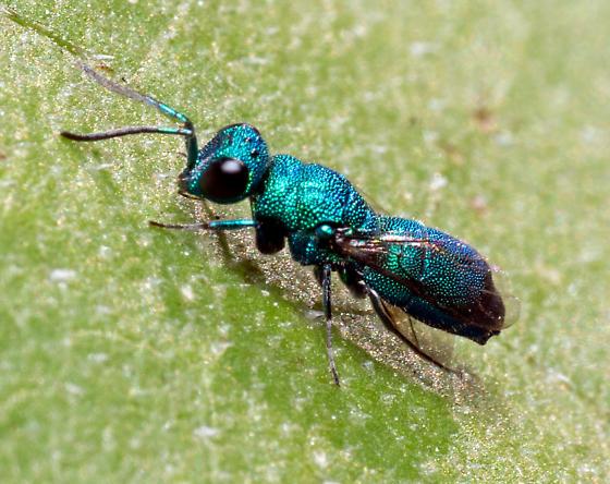 metallic green bee/wasp