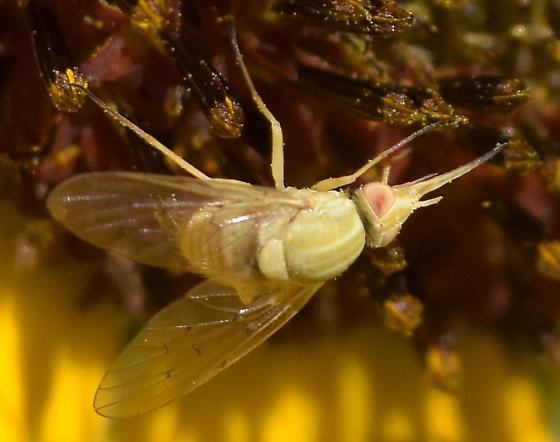 Poecilognathus - species? - Poecilognathus