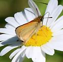 Garita Skipperling? individual #1 - Thymelicus lineola
