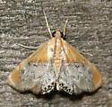 sooty-winged chalcoela (Chalcoela iphitalis) - Chalcoela iphitalis