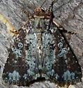 6/18/19 moth 2 - Condica confederata