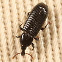 Blackish weevil - Cossonus