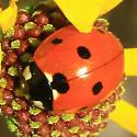 Ladybeetle - which one? - Coccinella septempunctata