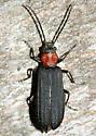 Net-winged Beetle? - Asclera ruficollis