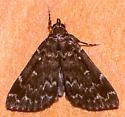 Moth - Idia lubricalis