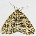 Yellow-veined Geometer Moth - Hodges#6430 - Orthofidonia flavivenata