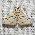 Chestnut-marked Pondweed Moth - Hodges#4761 - Parapoynx badiusalis
