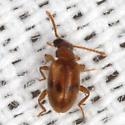 Tiny Beetle - Zonantes