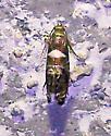Sedge Moths (Glyphipterigidae)