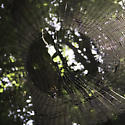 large dense web with