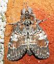 Notodantidae family? - Peridea ferruginea