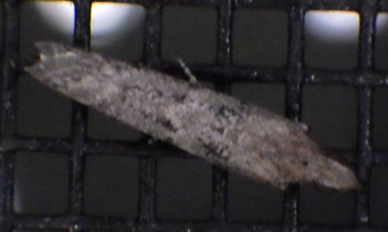 Moth attracted to blacklight