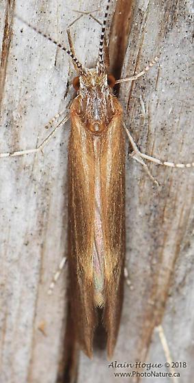 Hydropsychidae ?