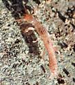Beetle larva?