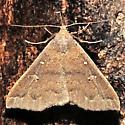 Renia adspergillus  - Renia adspergillus - female