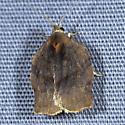Leaf-roller Moth - Archips purpurana