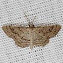 Drab Brown Wave Moth - Lobocleta ossularia