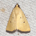 Black-bordered Lemon Moth - Hodges #9044 - Marimatha nigrofimbria