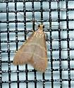 Arta genus I think - Arta epicoenalis