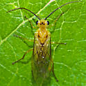 Unknown Bug - Nematus
