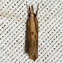 Crambid Snout Moth - Hodges #5431 - Fissicrambus profanellus