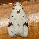 Black-marked Inga Moth - Hodges #1034 - Inga sparsiciliella