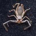 Predator bug