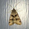 Unknown butterfly or moth - Caenurgina erechtea