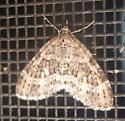 moth sp - Acasis viridata