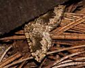 Antepirrhoe semiatrata