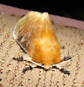 Flannel Moth? - Megalopyge opercularis - female