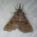 Moth - Renia salusalis - female