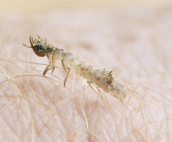 Larva of some sort