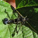 Clearwing - Synanthedon tipuliformis
