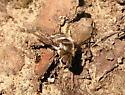 Bee Fly? - Villa