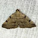 Is this a Zanclognatha lituralis? - Zanclognatha theralis