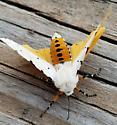 Estigmene acrea (Salt Marsh Moth) - Estigmene acrea - male