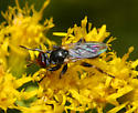 unidentified Diptera - Thecophora